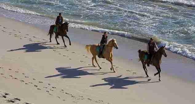 Vela ed Equitazione tra mare e natura - Vela Dream